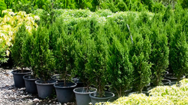 Pflanzen